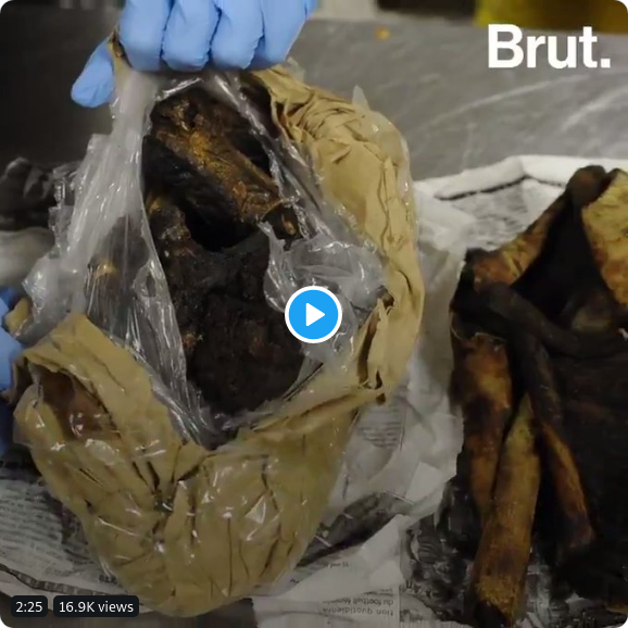 Croissance du trafic de «viande de brousse» dans de nombreuses villes d'Europe