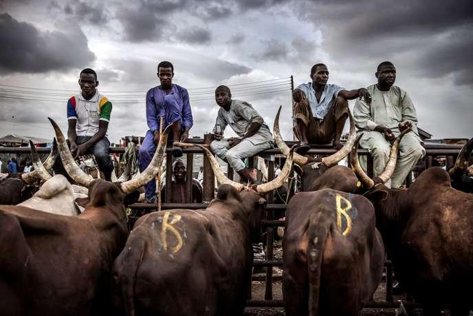 Nigeria : la production de viande ne peut pas suivre la démographie à cause des freins culturels et des conflits