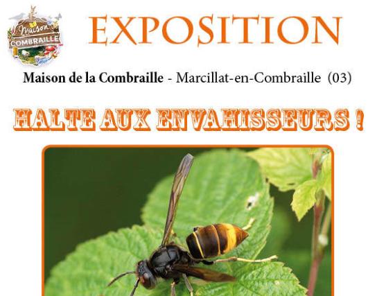 Ecologie : «Halte aux envahisseurs !», une exposition sur les espèces invasives à Montluçon (03)