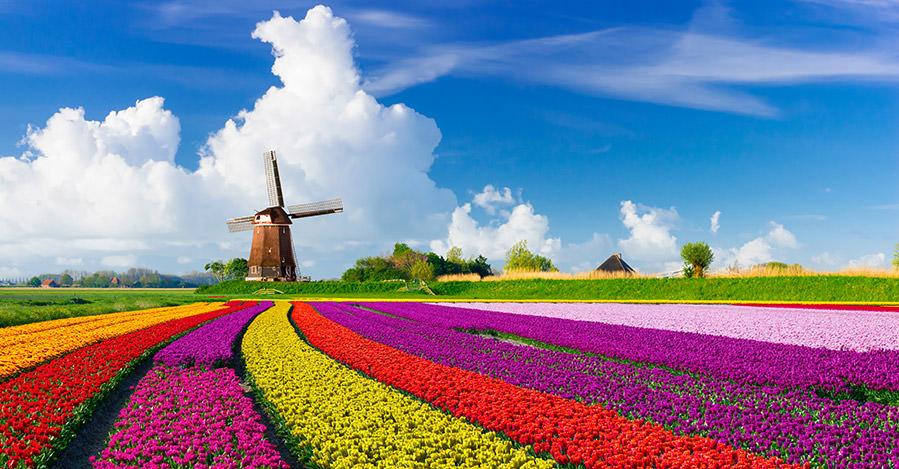 Pays-Bas : 62% des Néerlandais veulent stopper toute immigration extra-européenne, selon un sondage (MàJ)