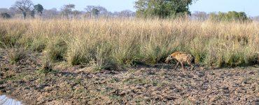 Les parcs nationaux africains, un autre enjeu géopolitique