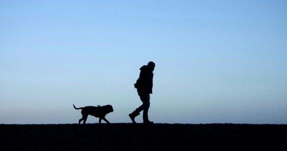 Les chiens, pires que les SUV pour la planète