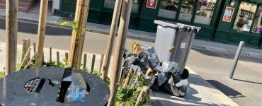 Conseil Municipal : LES RATS DEVIENNENT ESPÈCE PROTÉGÉE