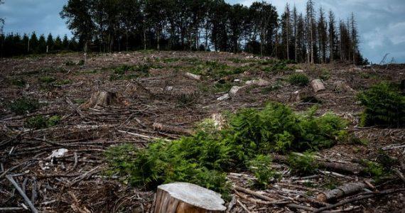 Aux arbres, citoyens! : dans le Morvan, des résistants achètent la forêt pour la sauver